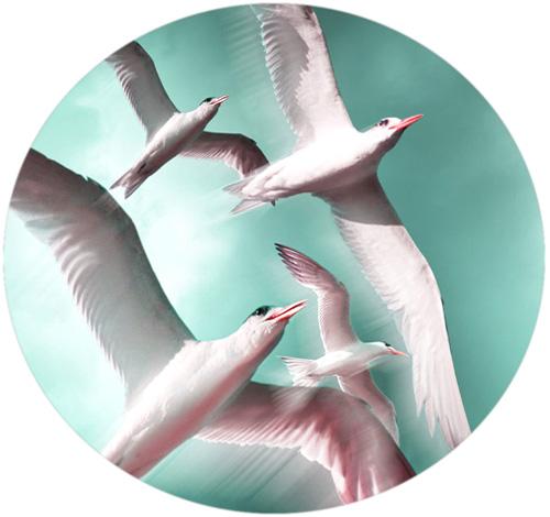 Kukuhaus Fliegende Vögel